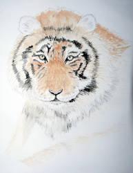 Tiger by karlhopkinsart