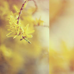 q0084 - spring by SlevinAaron