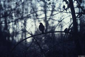 bird by SlevinAaron