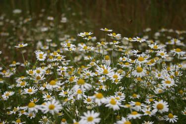 Wildflowers 01 by pegrowe62