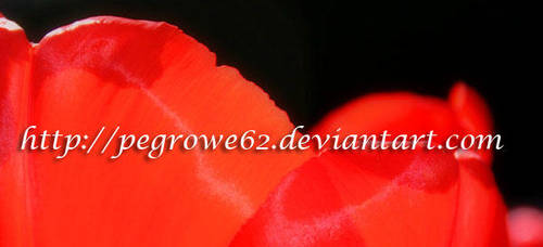 DeviantArt Avatar by pegrowe62