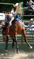 Rodeo 01 by pegrowe62