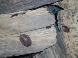 Cockroach on Wood by ManixTT-stock