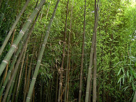 Bamboo 1 by ManixTT-stock