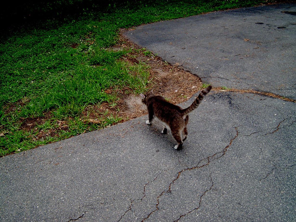 Cat Walking by ManixTT-stock