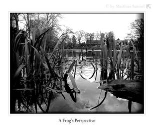 GreyArea - Frog's Perspective by 7ofCrosses