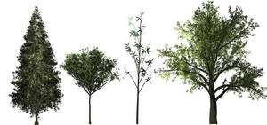 25 PNG Trees - Rendered in Photoshop by yourtutorials
