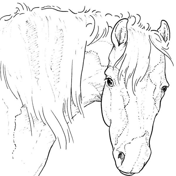 Free Horse Head Lineart by bonbon3272