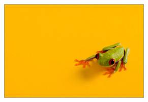 frog by dariuszsankowski