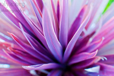 plant life in swansea by olya