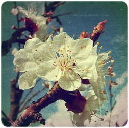 Spring Rhapsody by Sophibelle