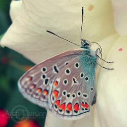 Lost Butterfly by Sophibelle