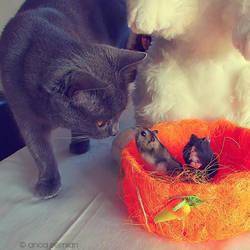 Easter Treats by Sophibelle