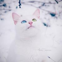 GRR by Sophibelle