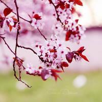 Spring Memory by Sophibelle
