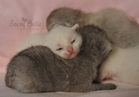 Newborn Kittehs by Sophibelle