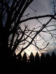 Tree Sunset by xaliaz-stock