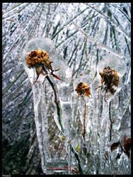 Frozen by Ever-Dream-Onward