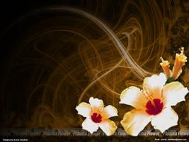 Plasma Flower by arunan-skanthan