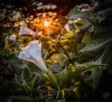 Eden by FabulaPhoto