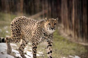 Spotted Hunter by LucieJirankova