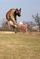 Jump High by LucieJirankova