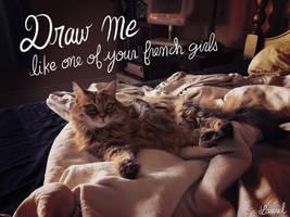 My cat. by bloglaurel