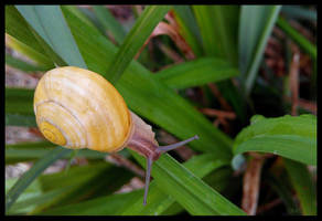 Snail by GabrielM1968