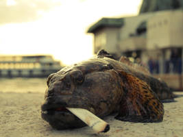 smoking fish by epatlis