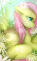 fluttershy by mr-tiaa
