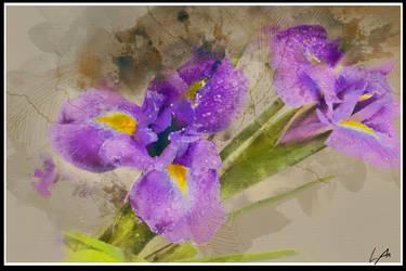 - Iridaceae- by Acerbical
