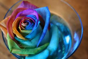 Rose by Mariquez