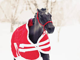 Dashing through the snow by creativecause