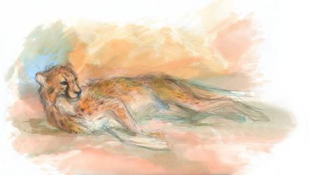 cheetah by Catakumba