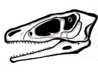 Dromaeosaurid Skull Drawing Exercise by NeonAmbassitor