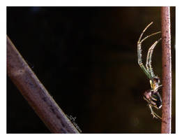 A Small Spider by playmobil