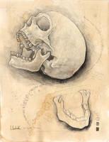 skull study by BrianLukArt
