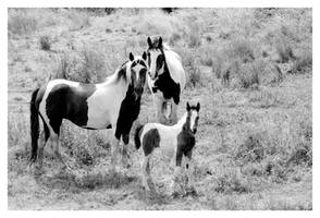 Horse Famille by w0lfman