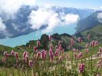 Flowers on the Rothorn of Brienz, Switzerland by LePtitSuisse1912