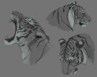 Just some Tiger headshots by SeaSaltShrimp
