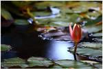 Blooming by NunoPires