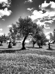 The Dreaming Tree - bw by NunoPires