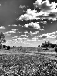 Fields of Gold - bw by NunoPires
