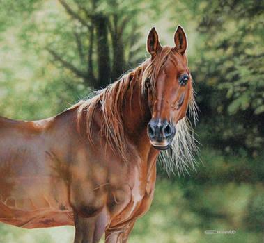 Arabian Horse by EsthervanHulsen