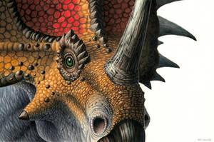 Styracosaurus by EsthervanHulsen
