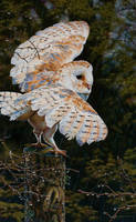 Rain Man (Barn Owl Painting) by EsthervanHulsen