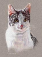 Cat Portrait 2 by EsthervanHulsen