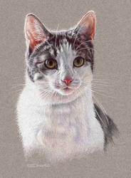 Cat Portrait 2 by EsthervanHulsen