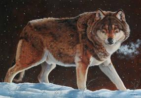 Wolf in Snow by EsthervanHulsen