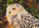 Painting of a Snowy Owl by EsthervanHulsen